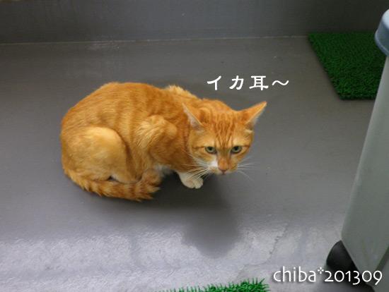 chiba13-09-10.jpg