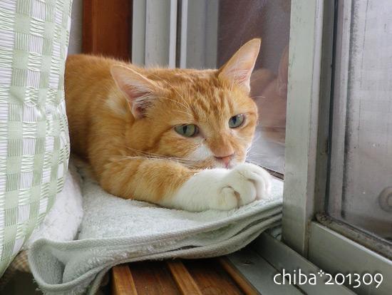 chiba13-09-100.jpg
