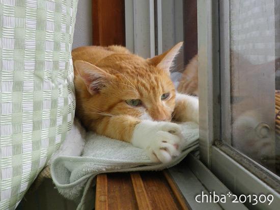 chiba13-09-101.jpg