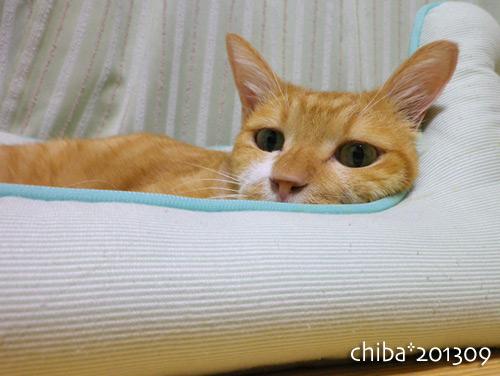 chiba13-09-105s.jpg