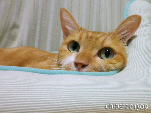 chiba13-09-106s.jpg