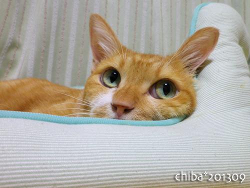 chiba13-09-107as.jpg
