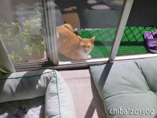 chiba13-09-138.jpg