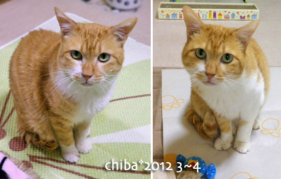 chiba13-09-37.jpg