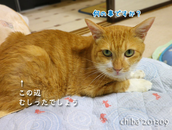 chiba13-09-80.jpg