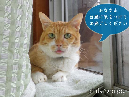chiba13-09-99.jpg