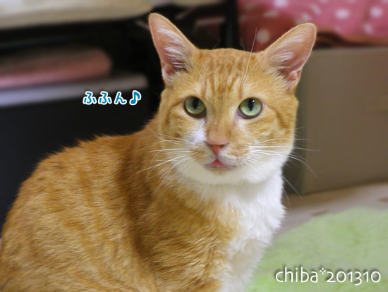 chiba13-10-33.jpg