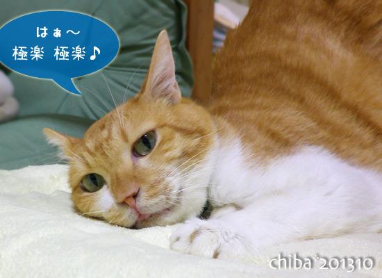 chiba13-10-81.jpg