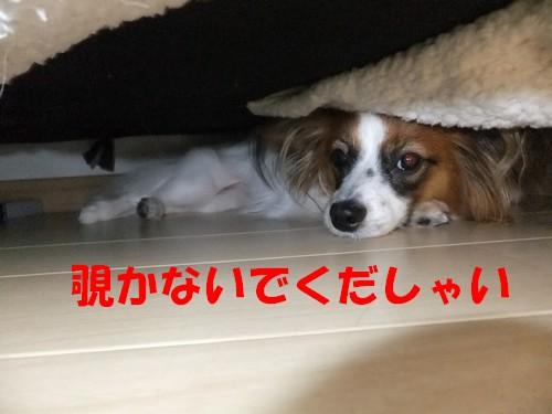 11_20130526223706.jpg