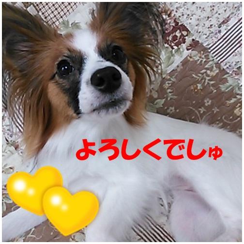 15_20130731205744256.jpg