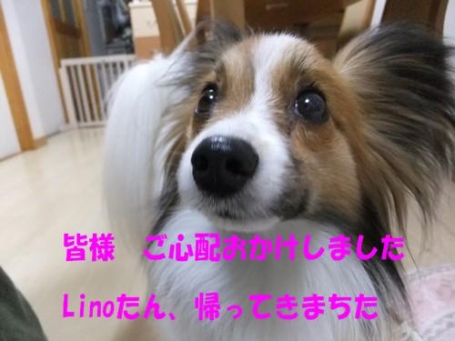 2_20130405174111.jpg