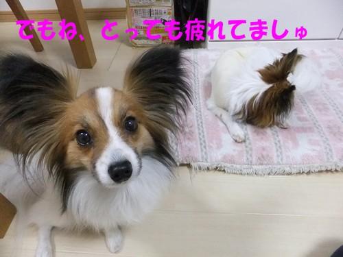 3_20130405174114.jpg