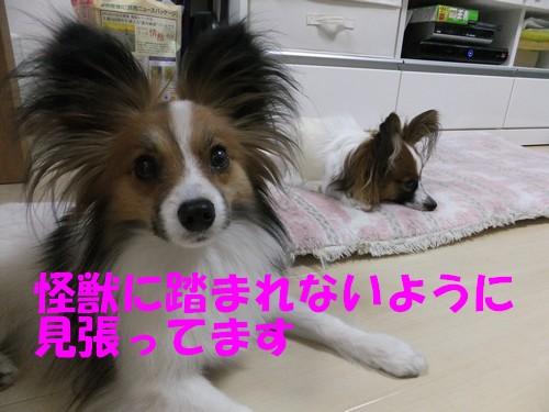4_20130405174117.jpg