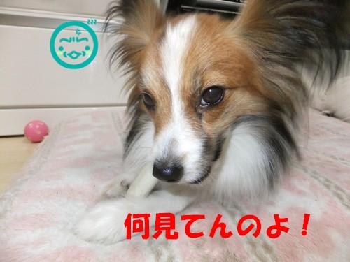 5_20130507114051.jpg