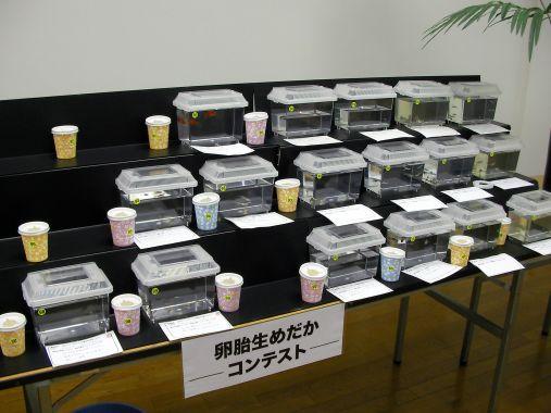 めだかイベント 2013-10-13 (6)