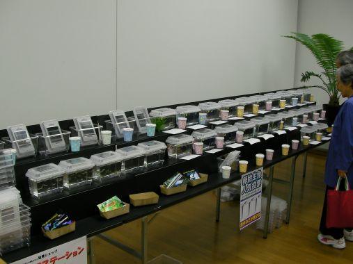 めだかイベント 2013-10-13 (3)
