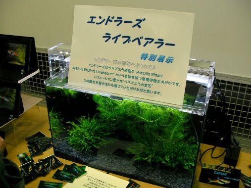 めだかイベント 2013-10-13 (4)