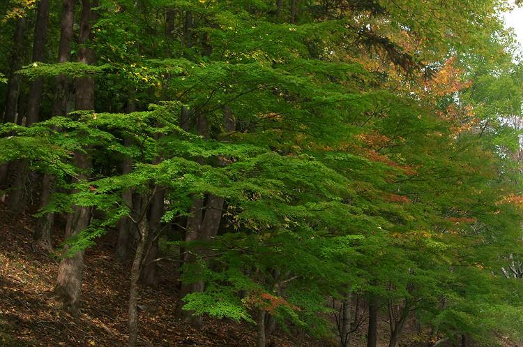 愛知県民の森
