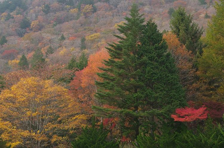 茶臼山高原の秋