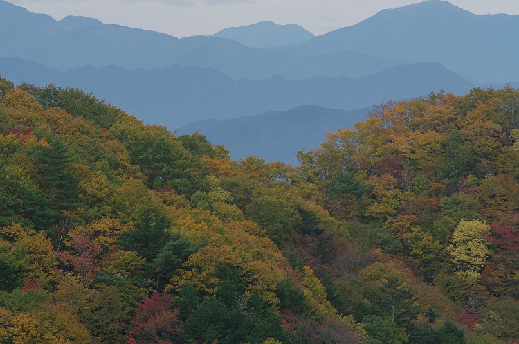 茶臼山高原の秋 2
