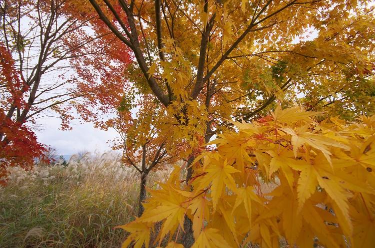 天竜スーパー林道の秋 2