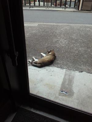 緊張感のない野良猫・・・