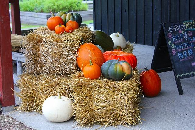 かぼちゃがいっぱい