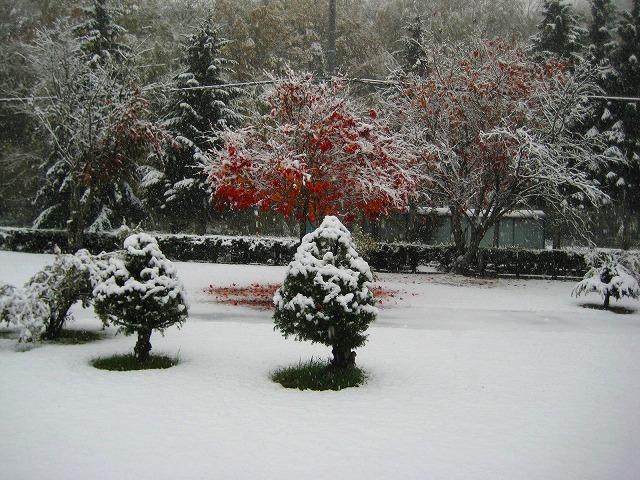 初雪 014