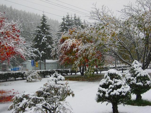 初雪 011