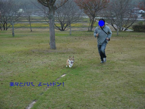 P1030449_convert_20131118105216.jpg