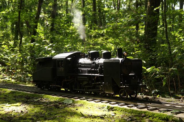 C56 129 森林の中で
