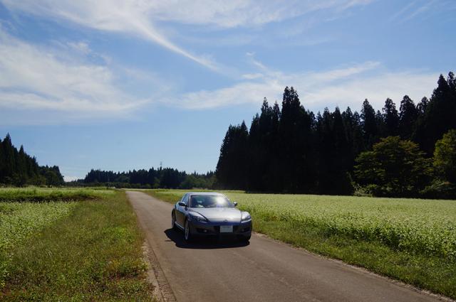 RX-8と伊達原秘密航空基地跡の蕎麦畑