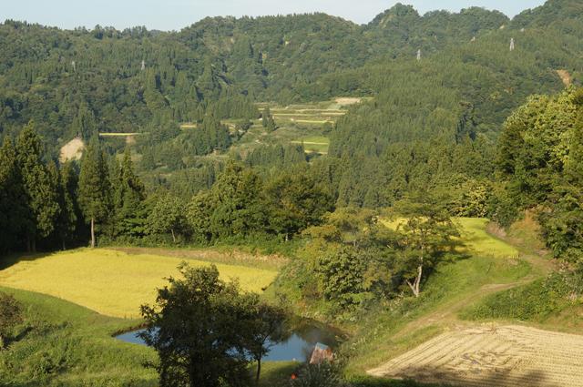 八箇の山奥の収穫風景
