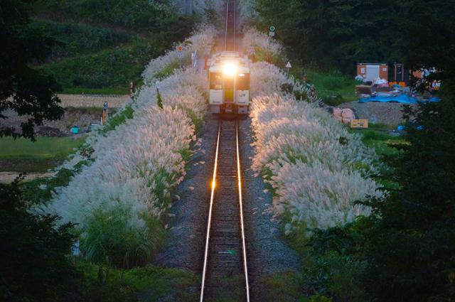 ススキをかき分ける飯山線 キハ111