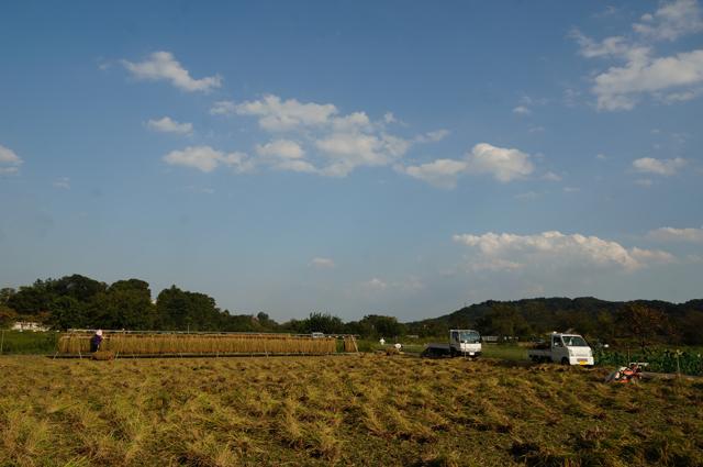 稲刈りの続き、そして働くマツダ
