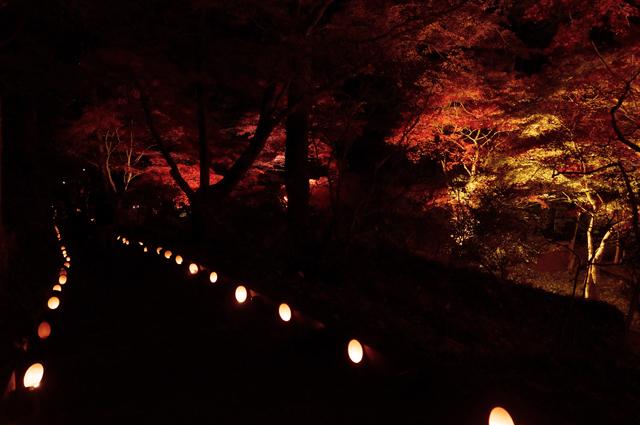 綺麗な紅葉ライトアップ