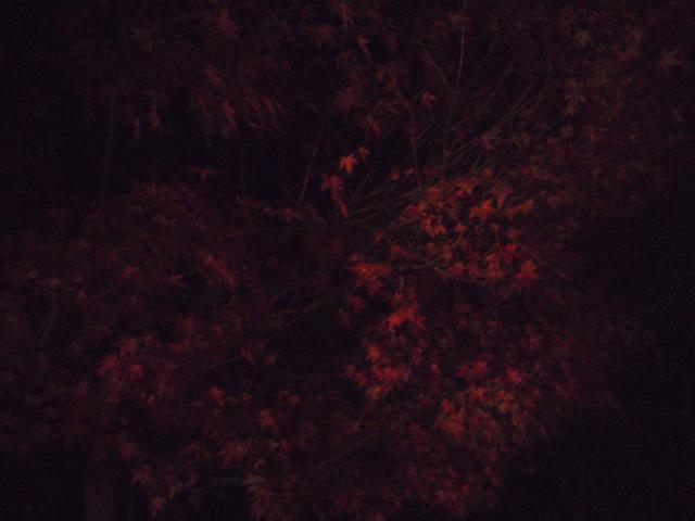 中央道原PAのモミジの紅葉