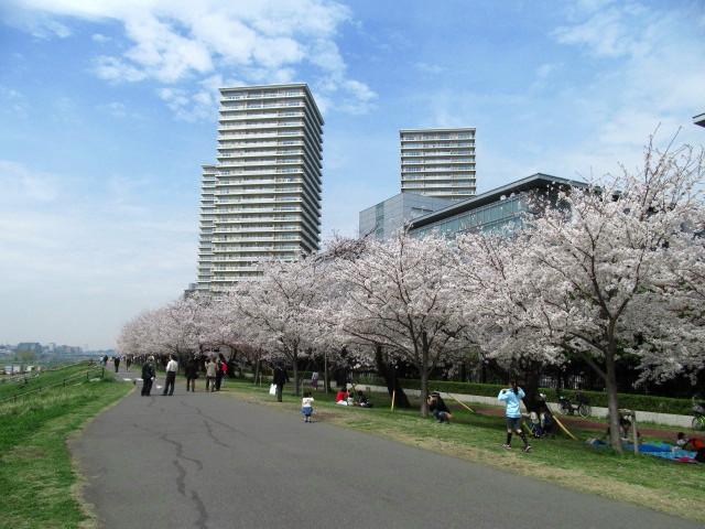 多摩川桜 009