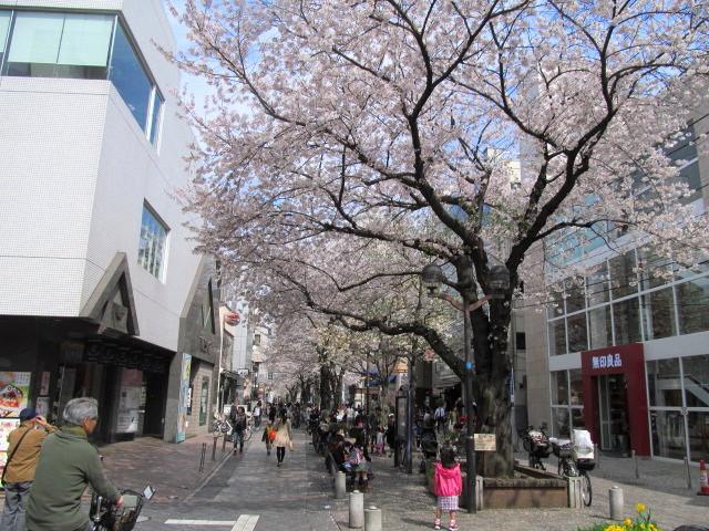 多摩川桜 018