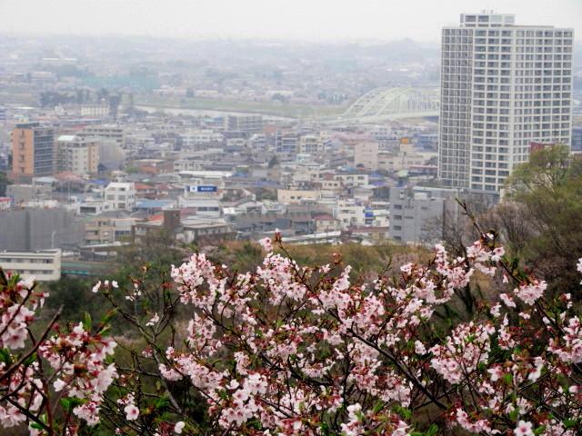 枡形山 019