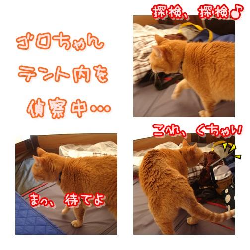 cats_20130518124951.jpg