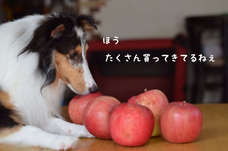 IMG_8474.jpg