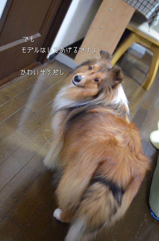 IMG_8536.jpg