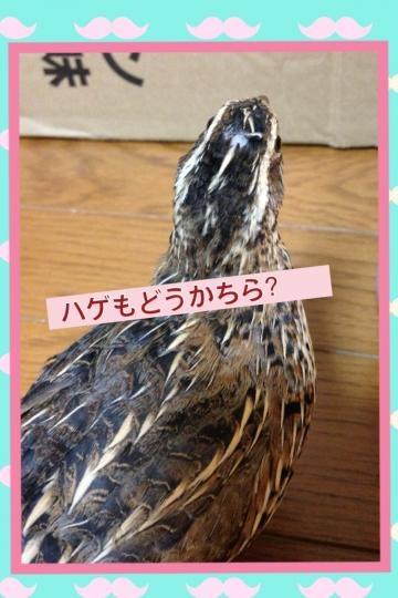 image_20130905213522900.jpg