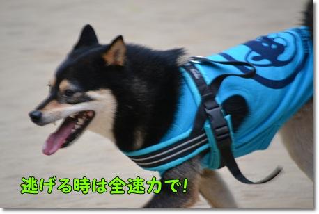 DSC_0051_20130602004918.jpg