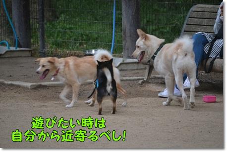 DSC_0088_20130602005057.jpg