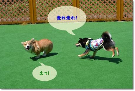 DSC_0138_20130608192316.jpg