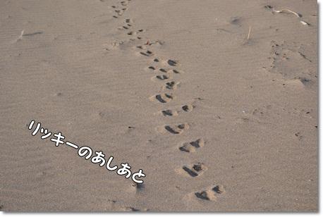 DSC_0194_20130420200802.jpg