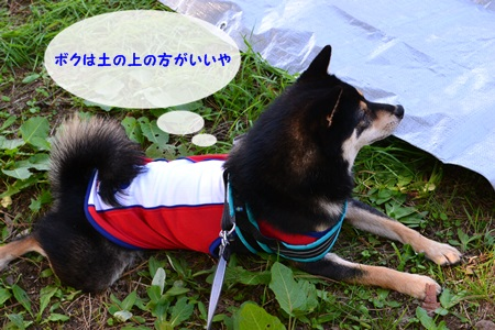DSC_0202_20131019214614638.jpg