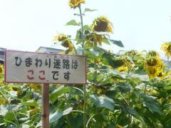 0801himawariri11.jpg